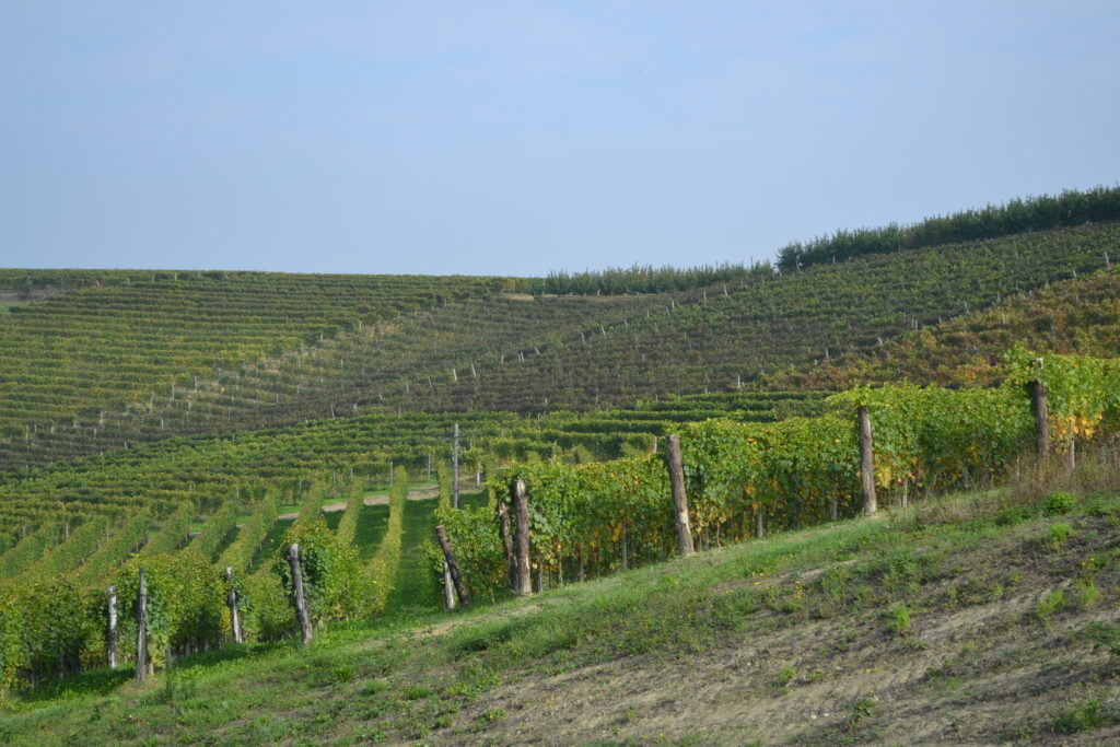 Corneliano colline